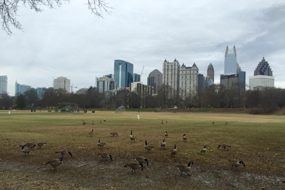 piedmont park geese atlanta